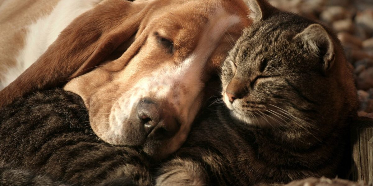 dog and cat sleeping together, technology that you and your pets will love